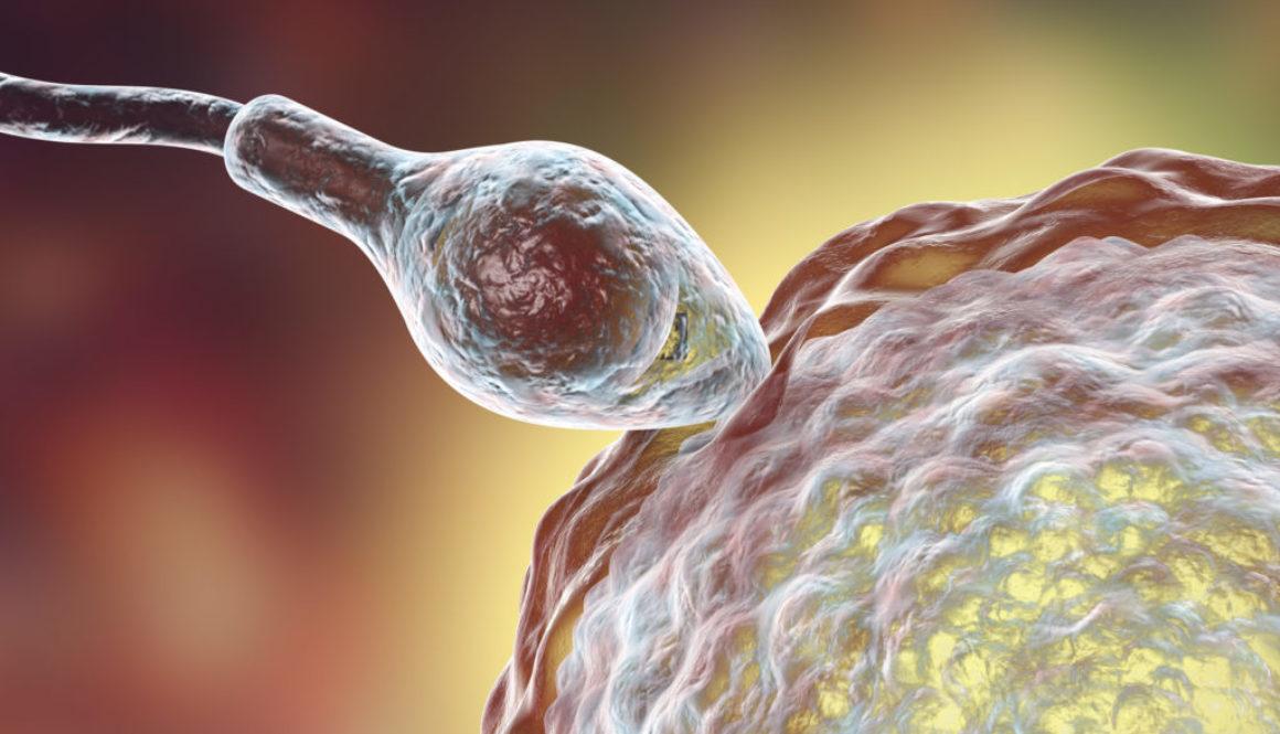 ¿Es el momento de empezar un tratamiento con óvulos donados?