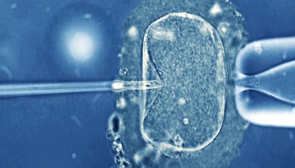 ¿Qué es el colapso embrionario? ¿Afecta a la implantación del embrión?