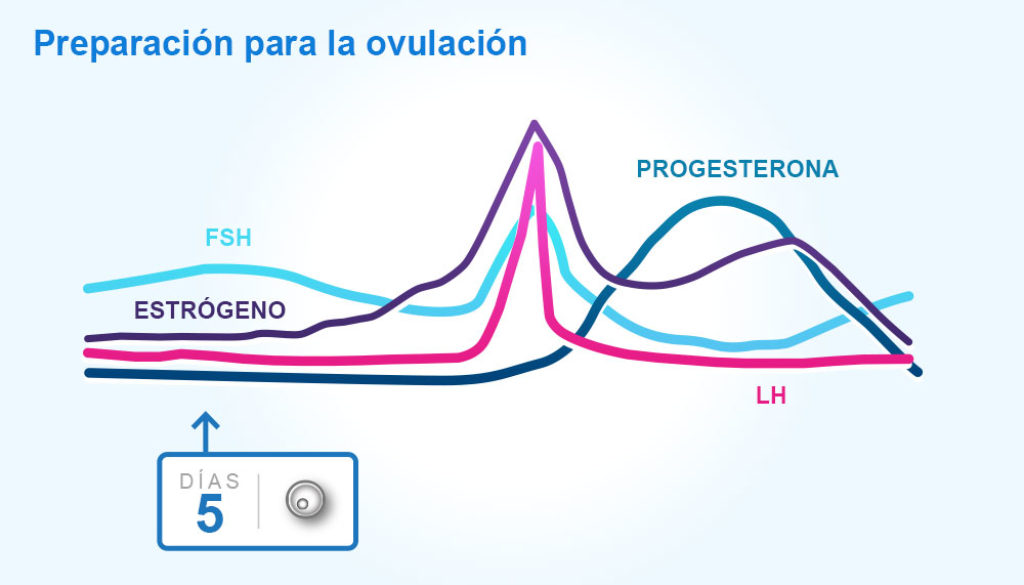 Ciclos menstruales y ovulación