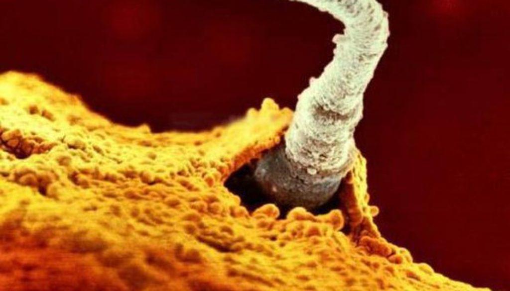 Conseguir óvulos y espermatozoides de las células madre de la piel: lo último en reproducción asistida