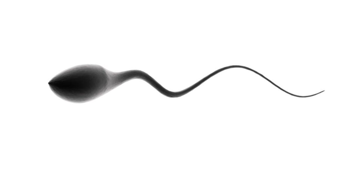 Esperanza contra la infertilidad: crearon semen artificial en ratones