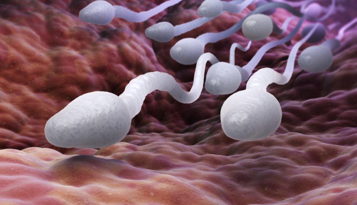 "He aquí el secreto del espermatozoide ""ganador"""