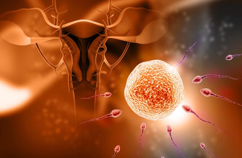 Fertilization, human cloning
