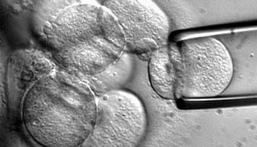 La calidad de un embrión