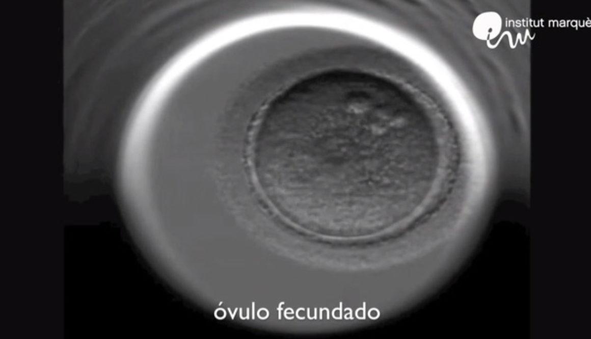 La música mejora la Fecundación In Vitro