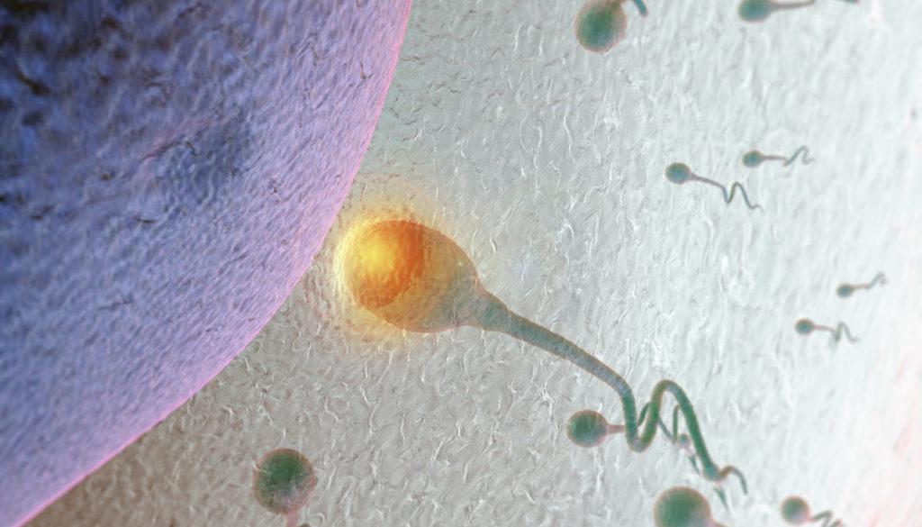 Spermium dringt in Eizelle