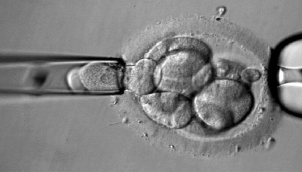 """Transferir embriones cromosómicamente """"anormales"""" puede resultar en un embarazo saludable"""