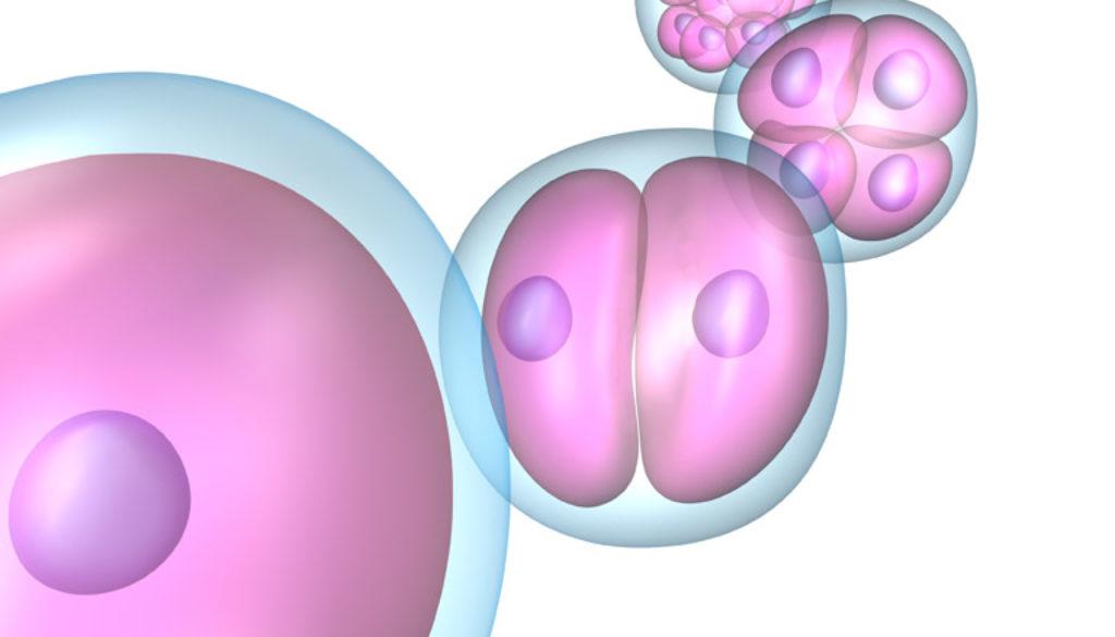 Una avería destruye en Italia cerca de un centenar de embriones