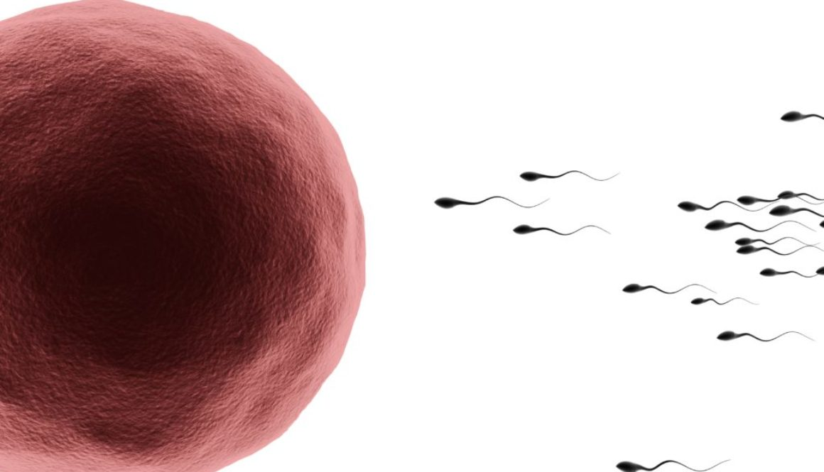 Sperm with human egg - natural insemination