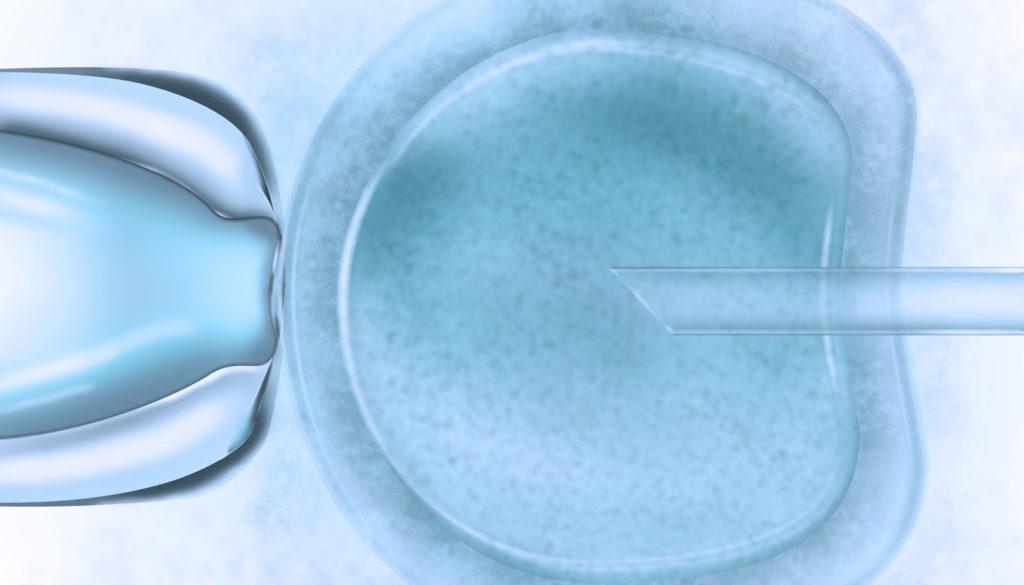 Knstliche Befruchtung - In-Vitro-Fertilisation